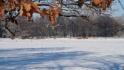 2021-01-31_Winter_in_Stuecken_05